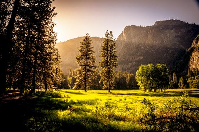 příroda, louka, polní cesta